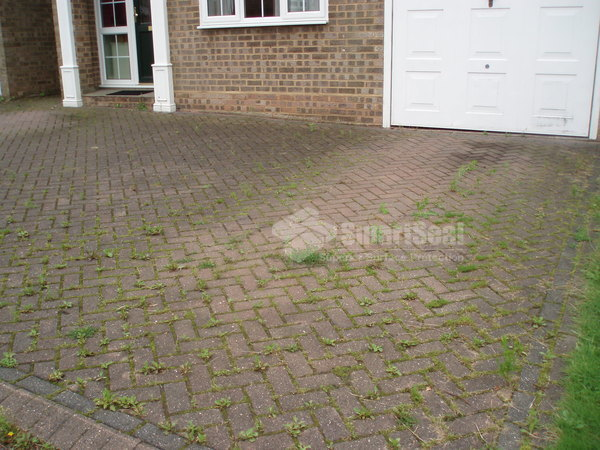 Weed infested driveway prior to restoration